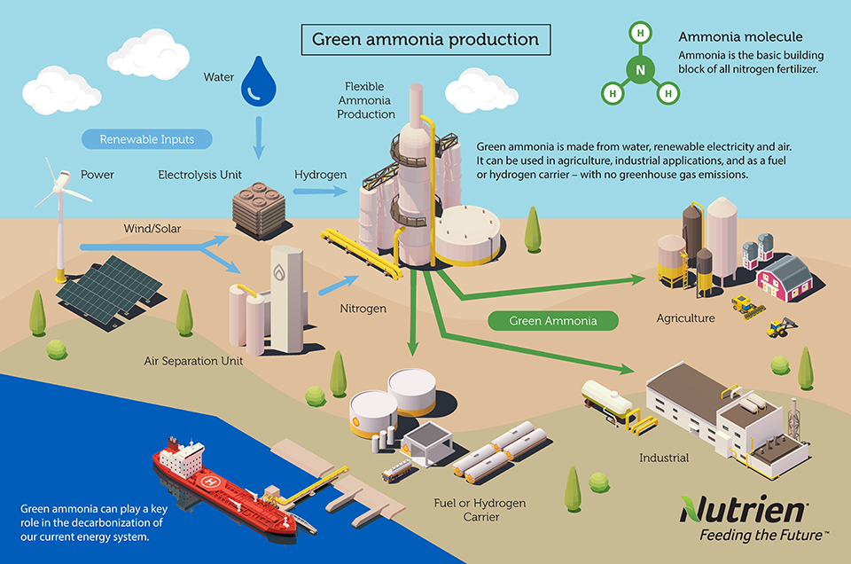 Green ammonia production