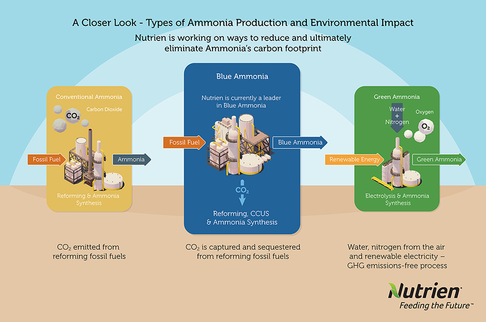 A closer look at ammonia production