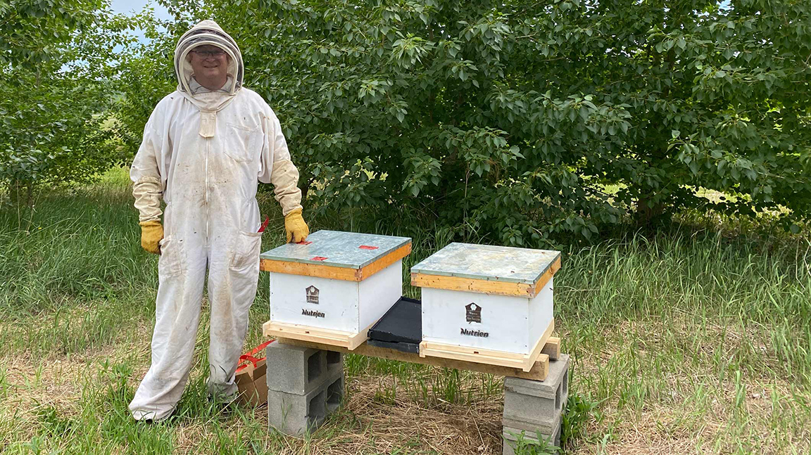 Honeybee-hives-ext in article
