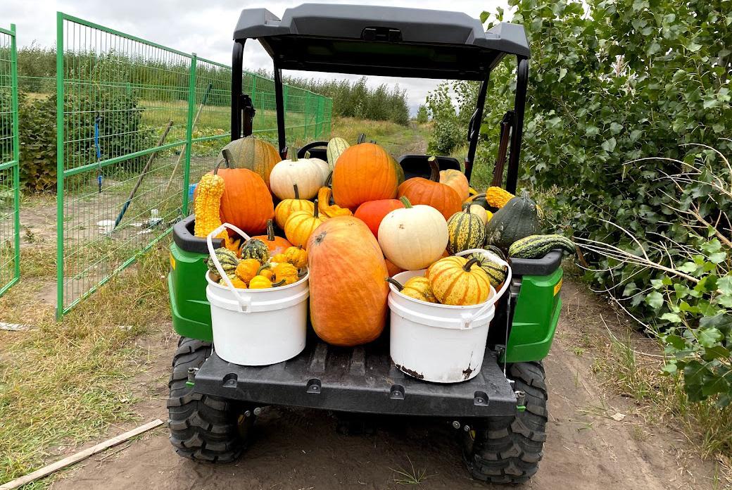 A golf cart full of pumpkins