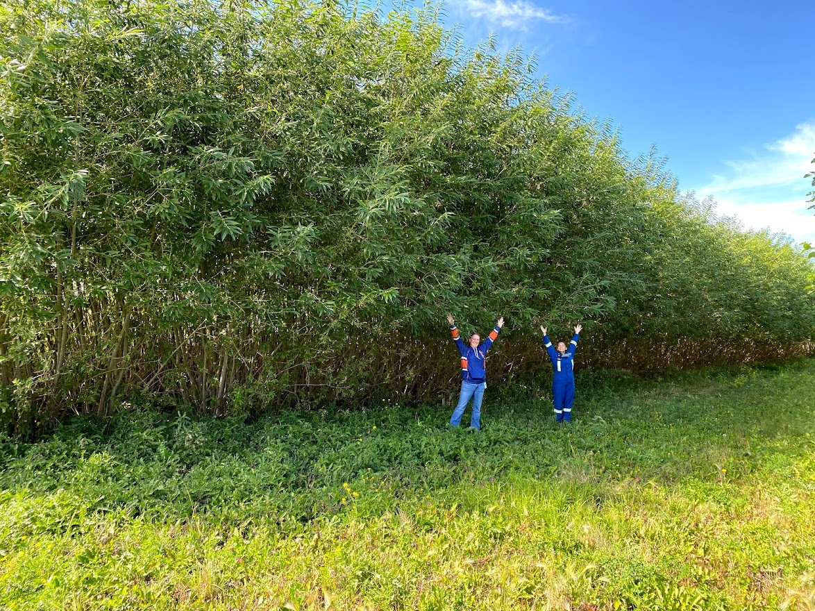 Team members celebrate next to full grown trees