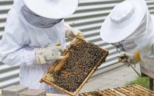 The buzz about Redwater's bee rescue